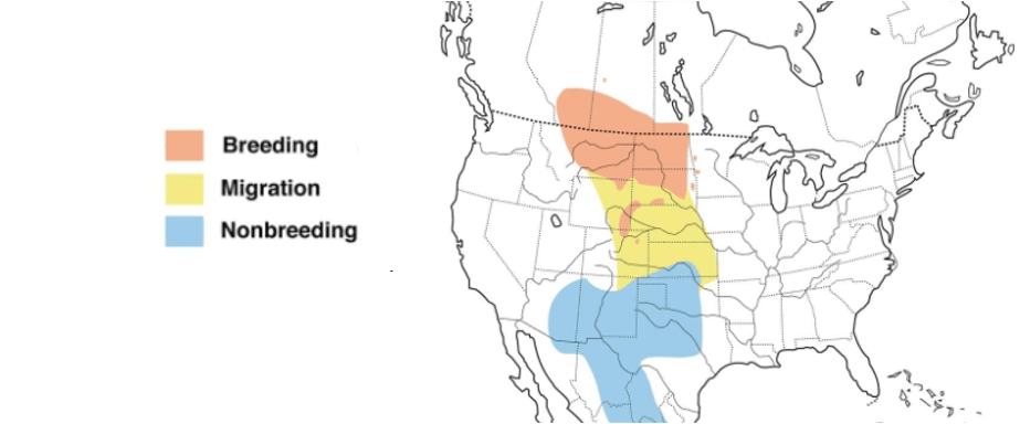 chestnut collared longspur range map