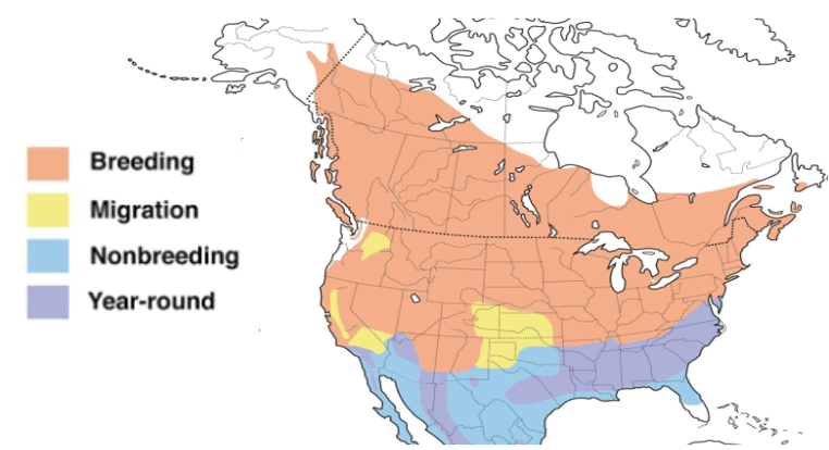 chipping sparrow range map