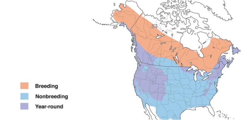 dark eyed junco range map