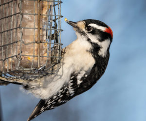 6 Proven Ways to Attract Woodpeckers! (2021)