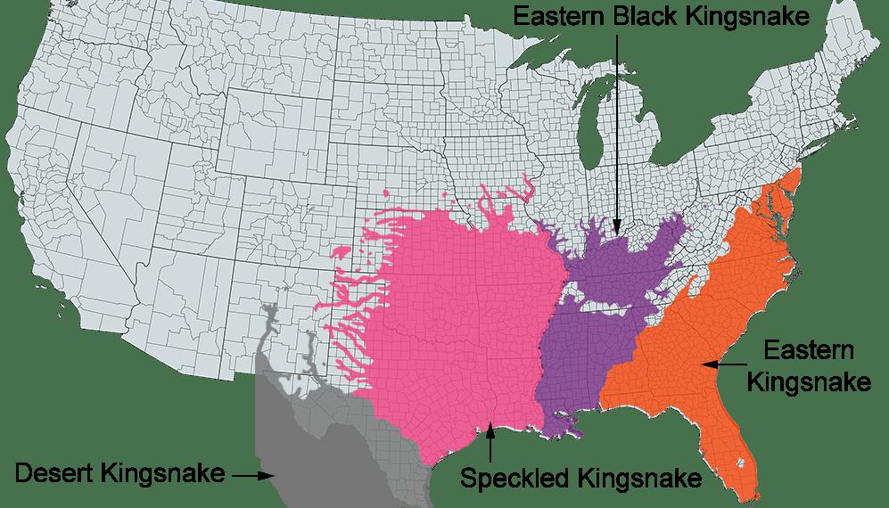 eastern black kingsnake range map