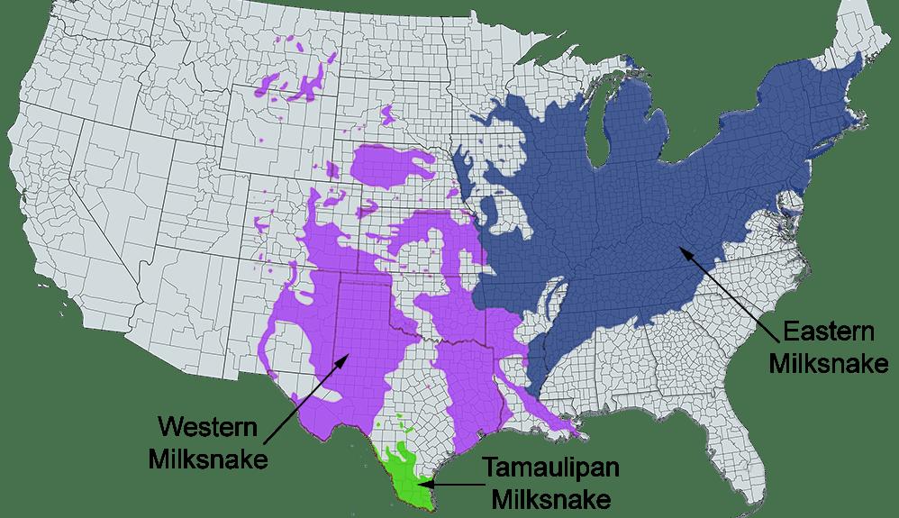 eastern milksnake range map
