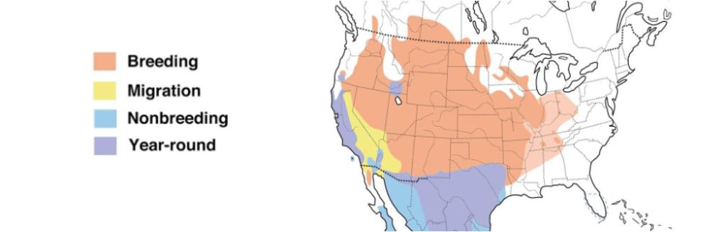 lark sparrow range map