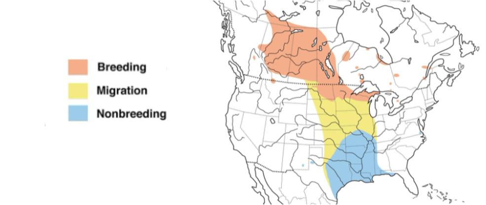leconte's sparrow range map