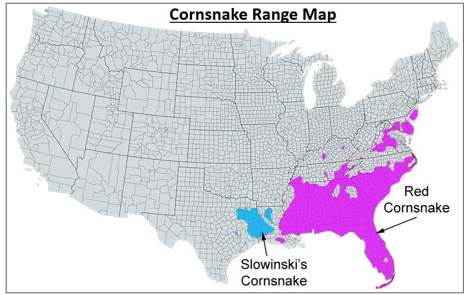 red cornsnake range map
