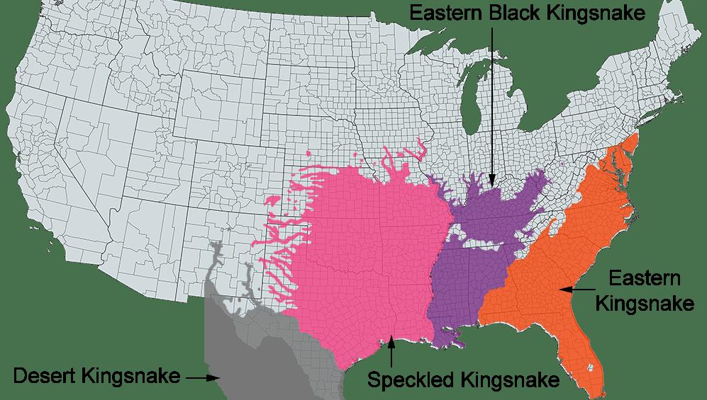 speckled kingsnake range map