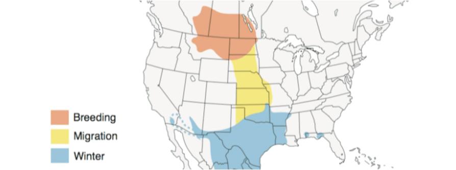 spragues pipit range map