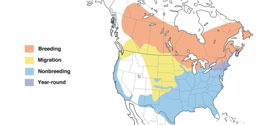 white throated sparrow range map