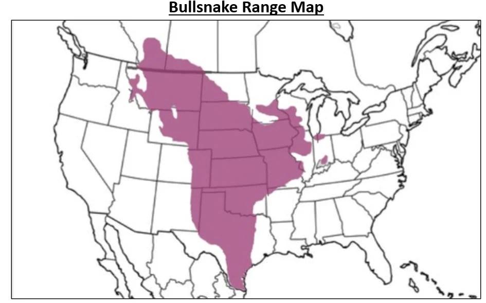 bullsnake range map