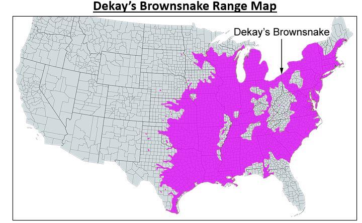 dekays brownsnake range map