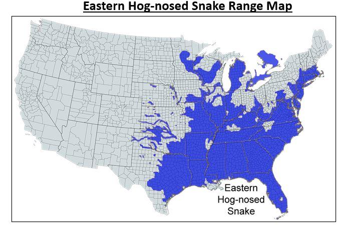 eastern hog nosed snake range map