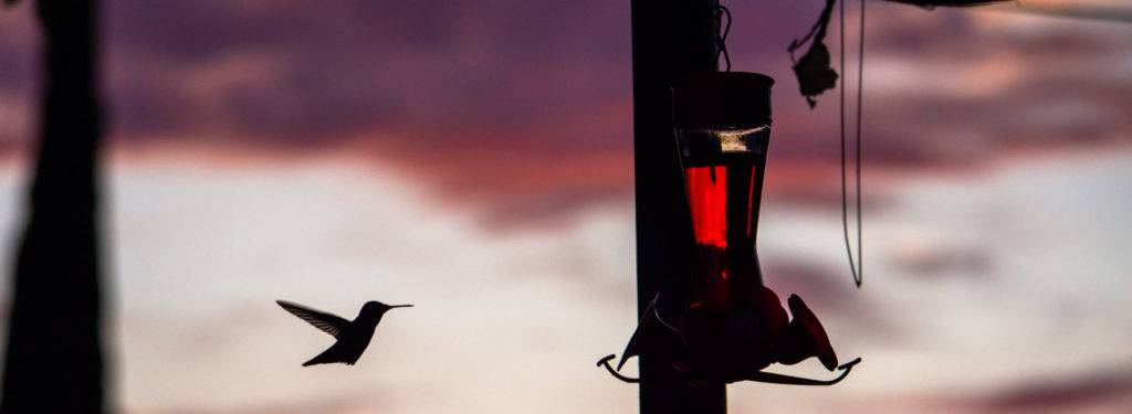 when to take hummingbird feeders down