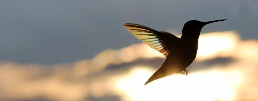 whento take hummingbird feeders down