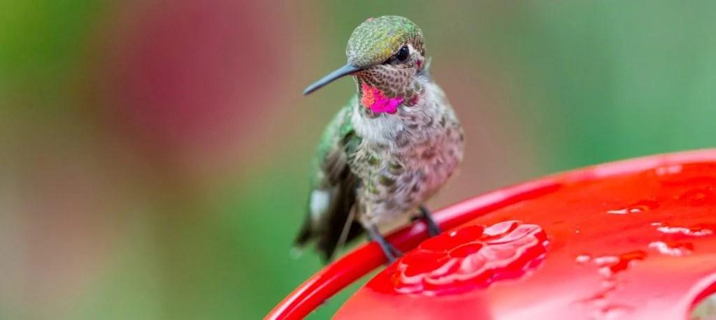 when to take down hummingbird feeder