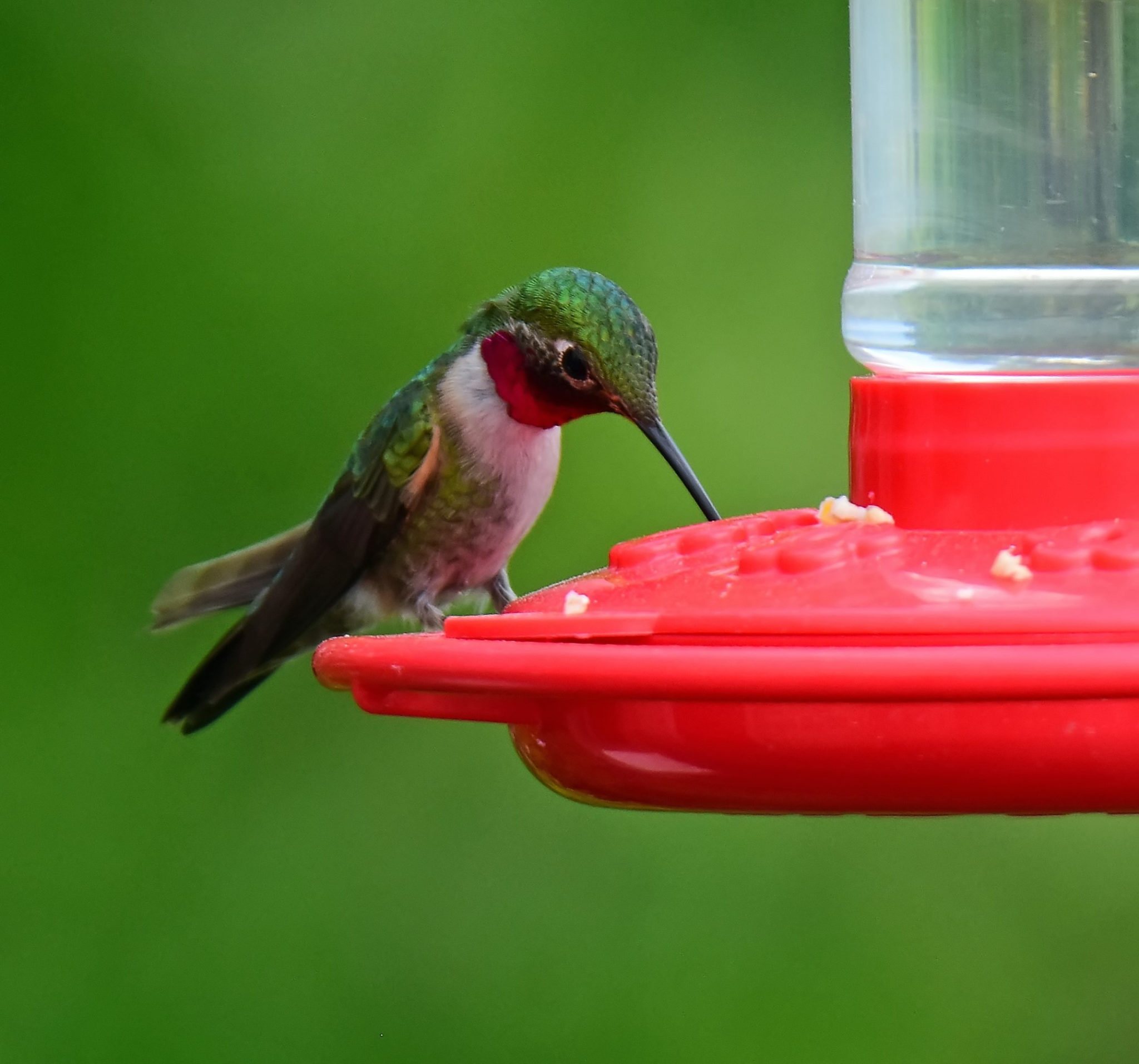 Here's when to take down your hummingbird feeders…