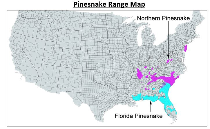 pinesnake range map