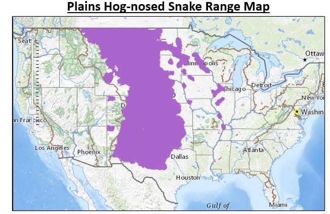 plains hog nosed snake range map