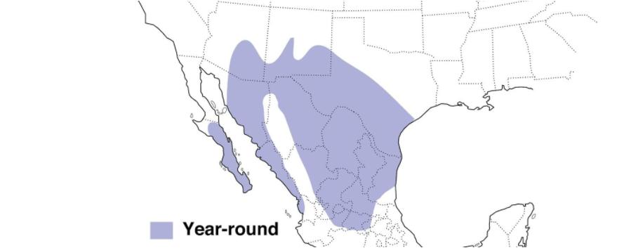 pyrrhuloxia range map
