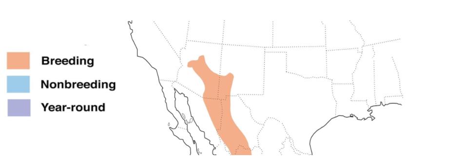 red faced warbler range map