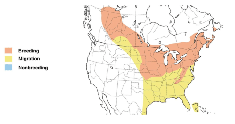 rose breasted grosbeak range map