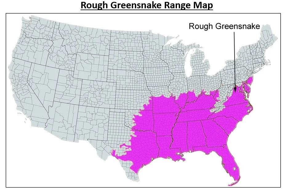 rough green snake range map