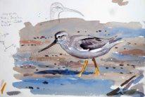 09 Szabocs Kokay - birdingmurcia