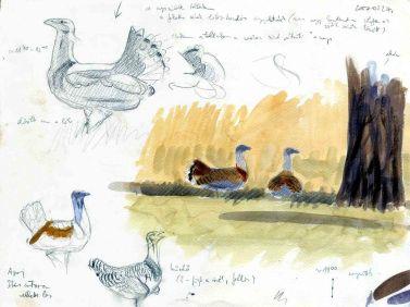 11 Szabocs Kokay - birdingmurcia