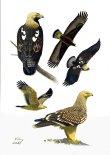 27 Szabocs Kokay - birdingmurcia