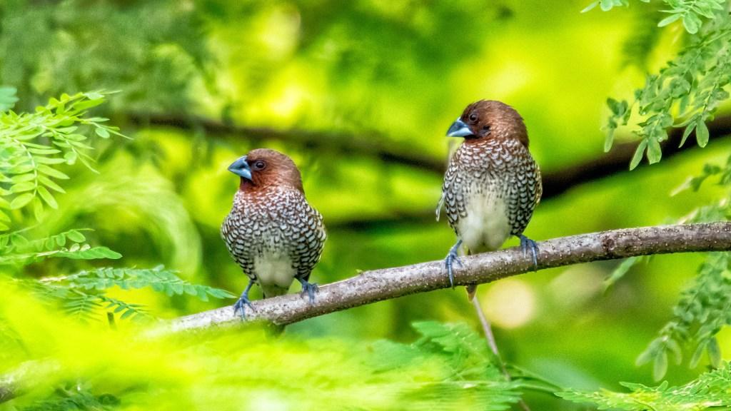 birding etiquette