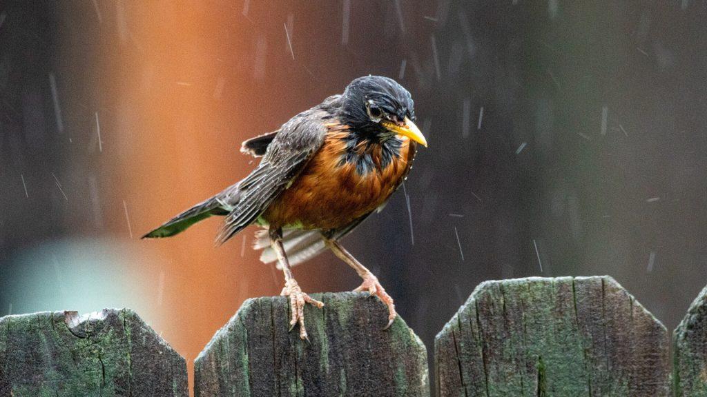 Is Bird Watching in the Rain Worth It