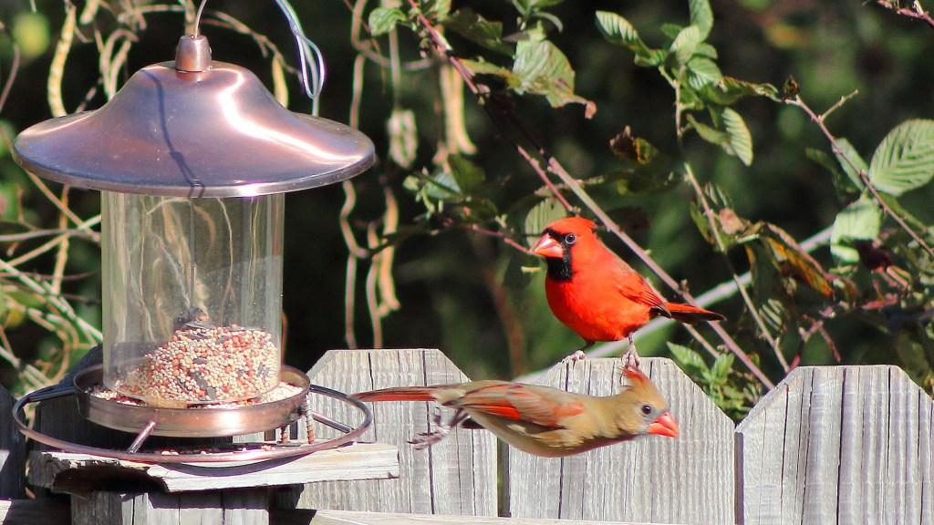 how to set up a bird feeder camera