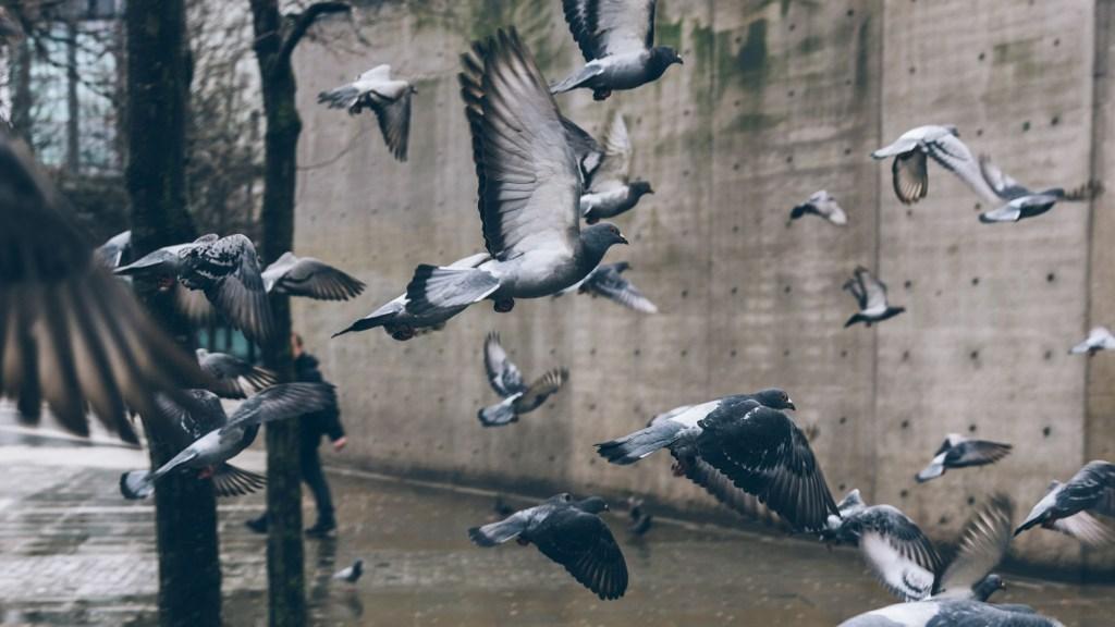 what do birds do when it rains