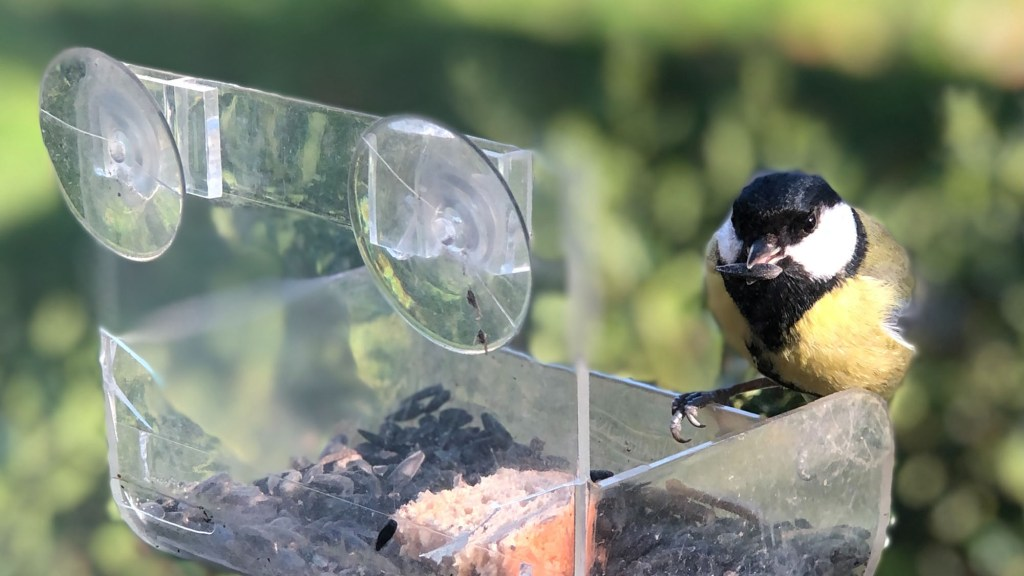 window bird feeders do they work