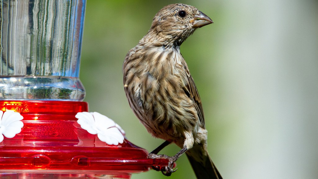 props for backyard bird photography