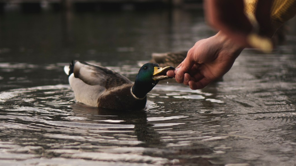 birds that can swim and fly