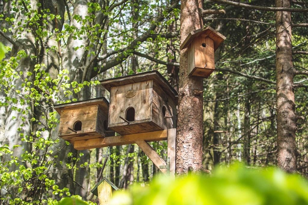 best bird safe wood treatment