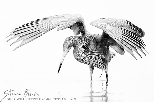 Silver medal at the PPA International Photographic
