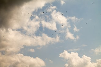 The dots in the skies are young storks soaring high for the first time in their life.
