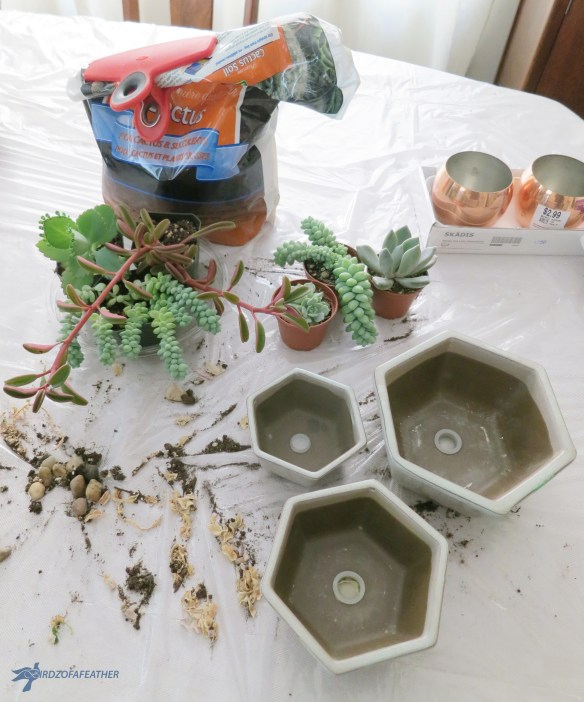 Create a succulent arrangement in a thrift store planter |birdz of a feather | succulents | succulents diy | upcycle | upcycling | upcycling ideas | upcycled | repurposed | repurposed items |bridzofafeather.ca | planter | planter ideas | thrift find | planters | planters diy | planter upcycle | planter upcycle repurposed | planter update | planter upcycle ideas |birdzofafeather.ca #upcycle #upcycling #repurposed #thrifting #thrifty #thriftstore #planters #succulents #succulentarrangement