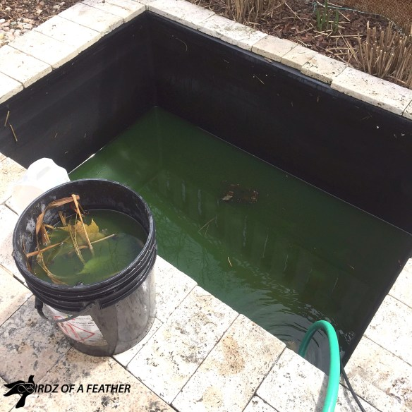 Spring cleaning isn't just for inside: get your pond summer ready with our how-to | Birdz of a feather | pond | pond maintenance #pond #birdzofafeather.ca