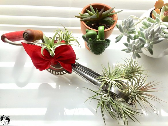 Dig through your vintage kitchen collection to 'whip up' an interesting air plant display. Air plants are beautiful and easy to care for! Birdz of a Feather | air plant display ideas | diy air plant display | unique air plant display | air plant display diy | air plant display diy simple | air plant display diy unique | upcycling | upcycling ideas | upcycled air plant holder | air plant holder | air plant decor | air plant decor ideas | air plants diy | air plant care | air plant care tips