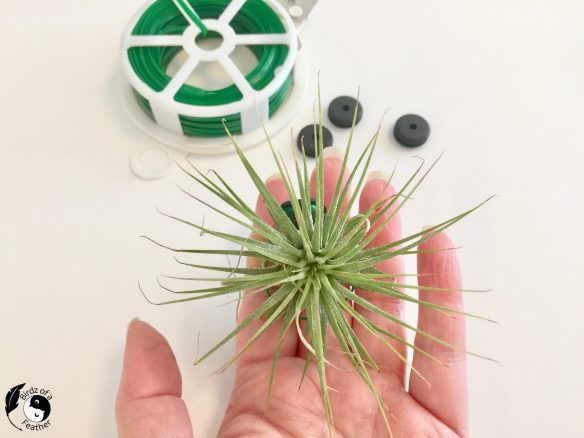This air plant holder DIY is the solution if you have limited space to display air plants. Learn how to create an air plant holder you can hang in a window! Birdz of a Feather | Air plant holder ideas | air plant holder | air plant display | air plant decor | air plant display diy | air plant decor | air plant decor ideas