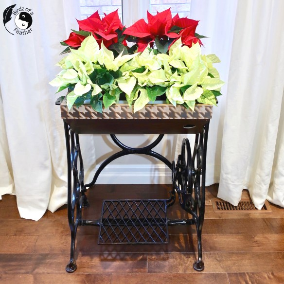 A tiered plant stand DIY does justice to my chrismas pointsettias! Stencilled in houndstooth, this indoor plant stand for multiple plants is gorgeous! Birdz of a Feather | indoor plant stand ideas | tiered plant stand | christmas house plants | christmas plant decor | christmas plant ideas | sewing table diy | planter table | diy planter table | indoor planter table | vintage sewing table | repurpose sewing table | old sewing machine cabinet redo | tiered plant stand indoor