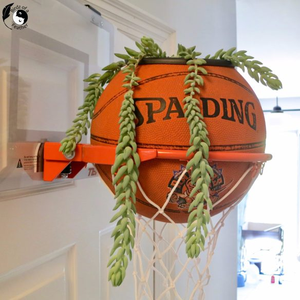 You might say we're 'on the ball' with this basketball planter or that it's a 'slam dunk'. No matter what you call it, there's no denying this is the easiest upcycled planter idea we've created to date. birdz of a feather | basketball planter | basketball planter diy | how to make a basketball planter | upcycled planter ideas | upcycled planters outdoor | upcycled planters indoor | planter ideas | planters | basketball hoop planter | slam dunk planter | basketball upcycling | basketball upcycle