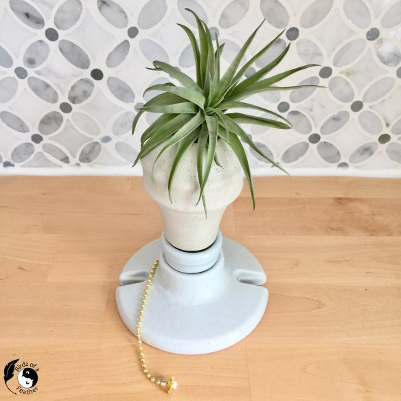 Cement planter made with cement planter molds using recycled light bulb packaging. The air plant holders holds a spiky air plant