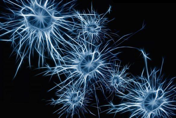 neurons-1773922_1920-1024x683