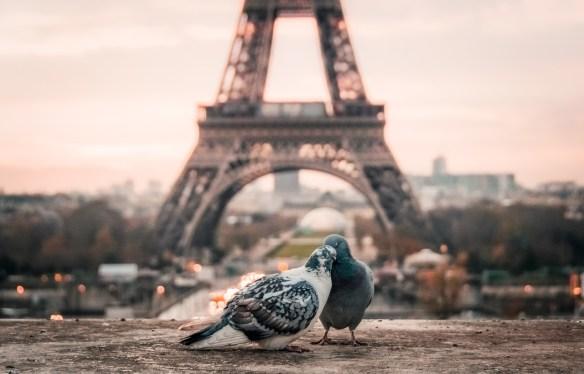 bird-2590901_1920