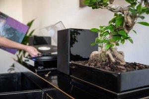 Plattenspieler und Pflanzendekoration im Praxisraum von Birgit Grandl