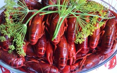Crayfish Rhapsody