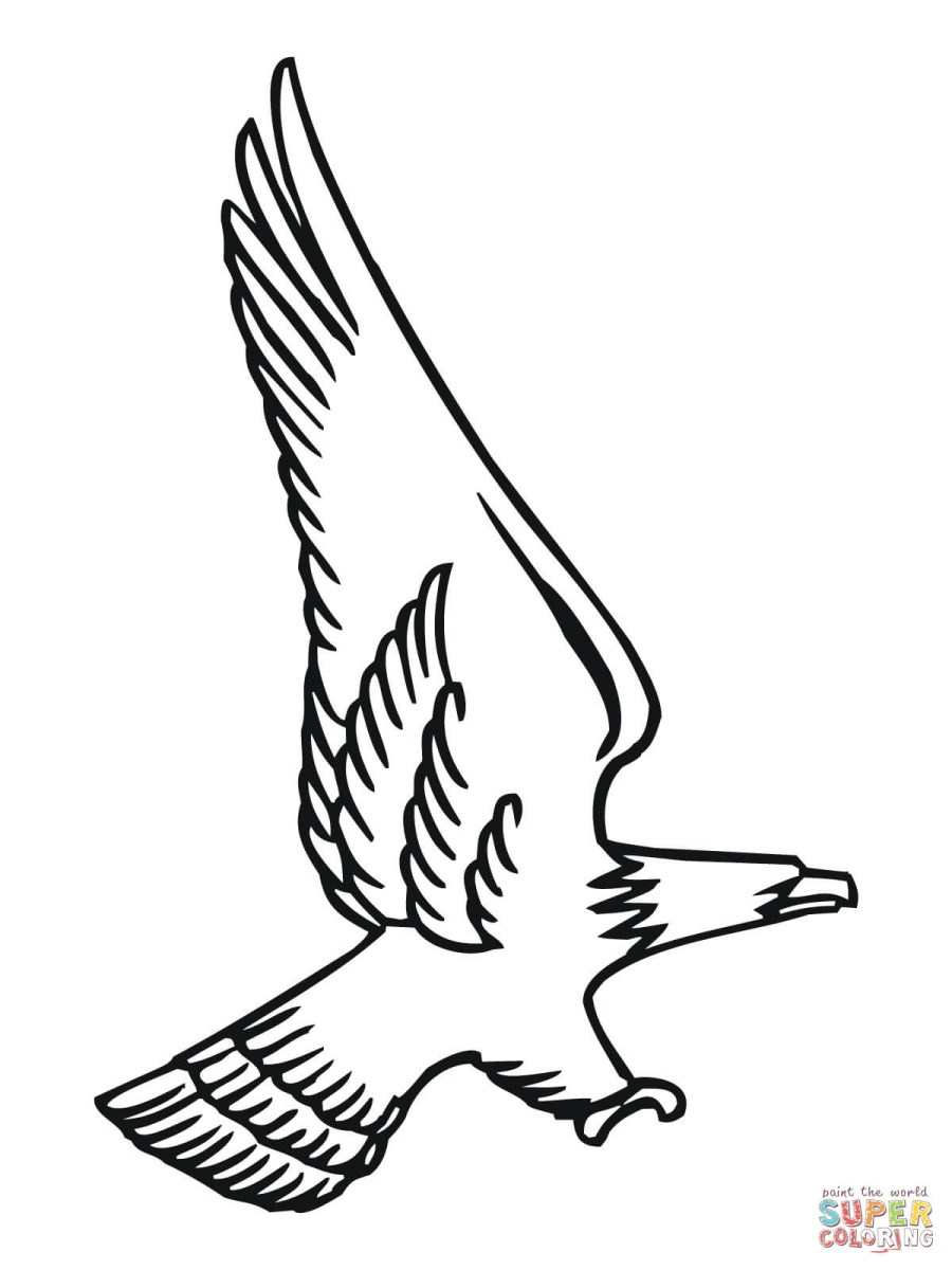 Eagle - Birds Adult Coloring Pages | 1200x900